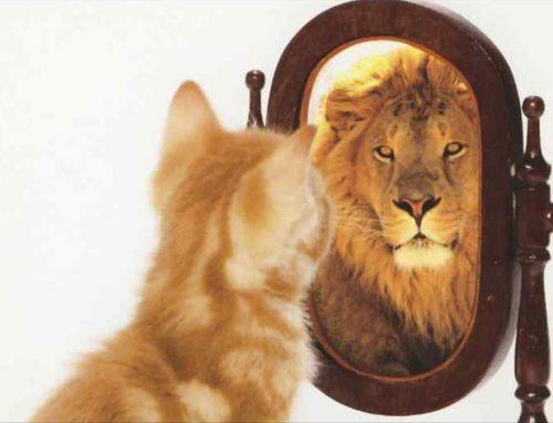 De relatie tussen achterdocht en eigenwaarde ontrafeld